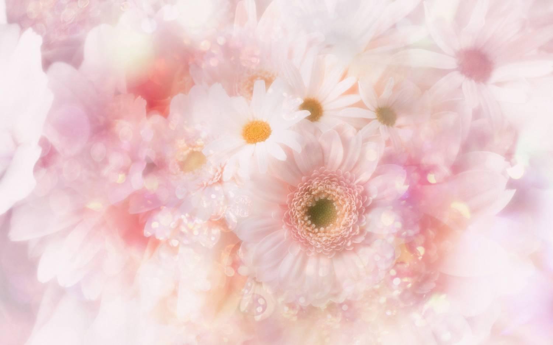 На рабочий стол нежно розовые цветы