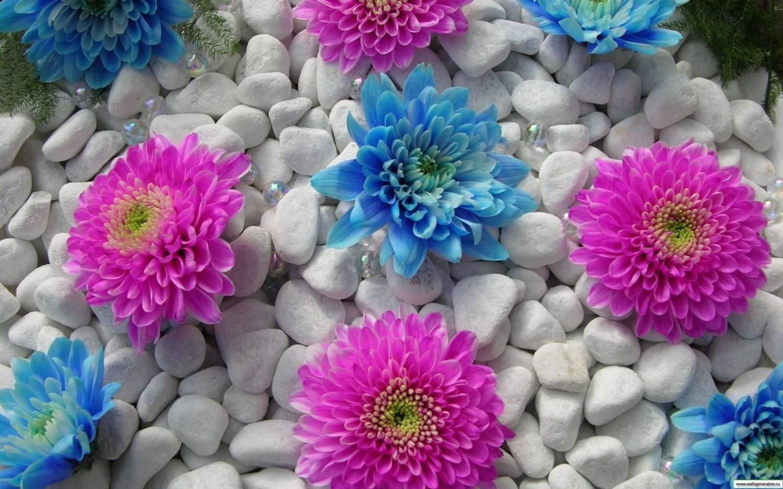 На рабочий стол камни и цветы